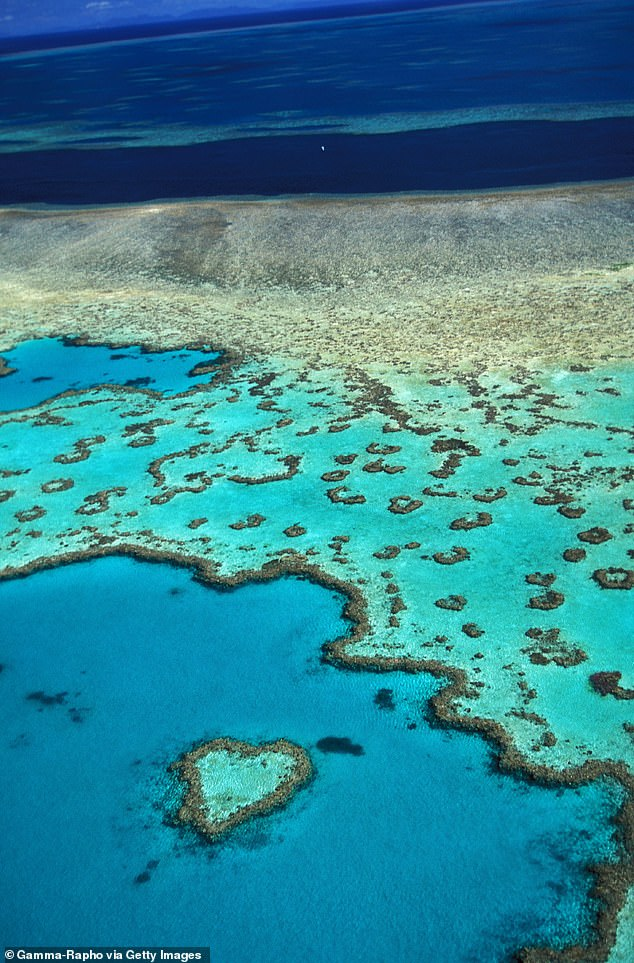 'Even at 1.5 degrees Celsius of warming, conditions will change beyond many organisms' ability to adapt,' the report notes. And this includes the Great Barrier Reef