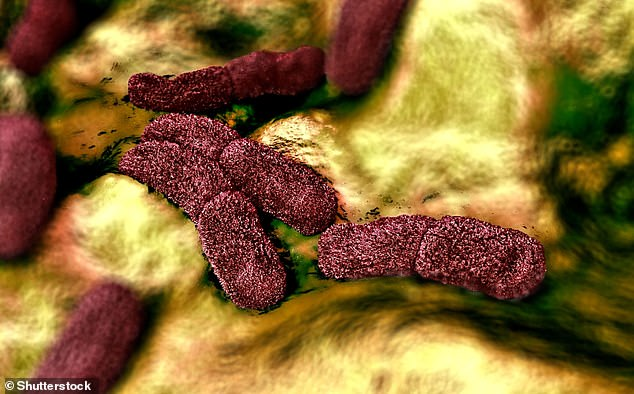 3D illustration ofYersinia pestis - the bacteria behind the the Black Death in the 14th century