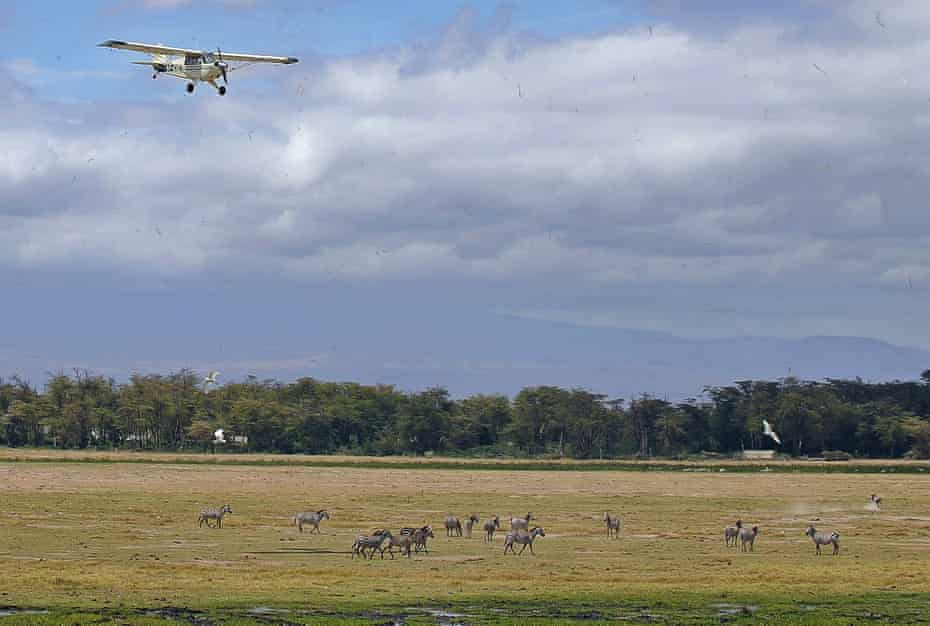 Aircraft flies over a herd of zebra at Amboseli National Park, Kenya