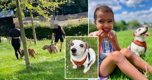 Blind family dog dies in park after being mauled by three vicious Pitbull Terriers