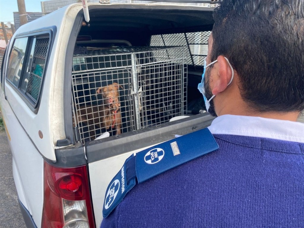 SPCA obtains court warrant to have dogs removed from Manenberg property.