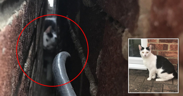 A distressed cat was freed from a three-inch gap between two homes after a woman let firefighters remove bricks from her garage wall in Middlesbrough.