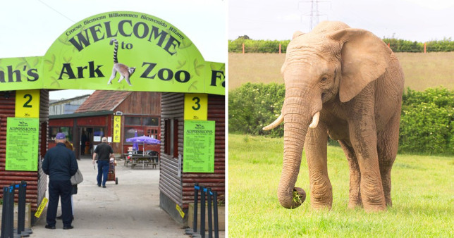 Elephant killed in his sleep by another male at British zoo SWNS
