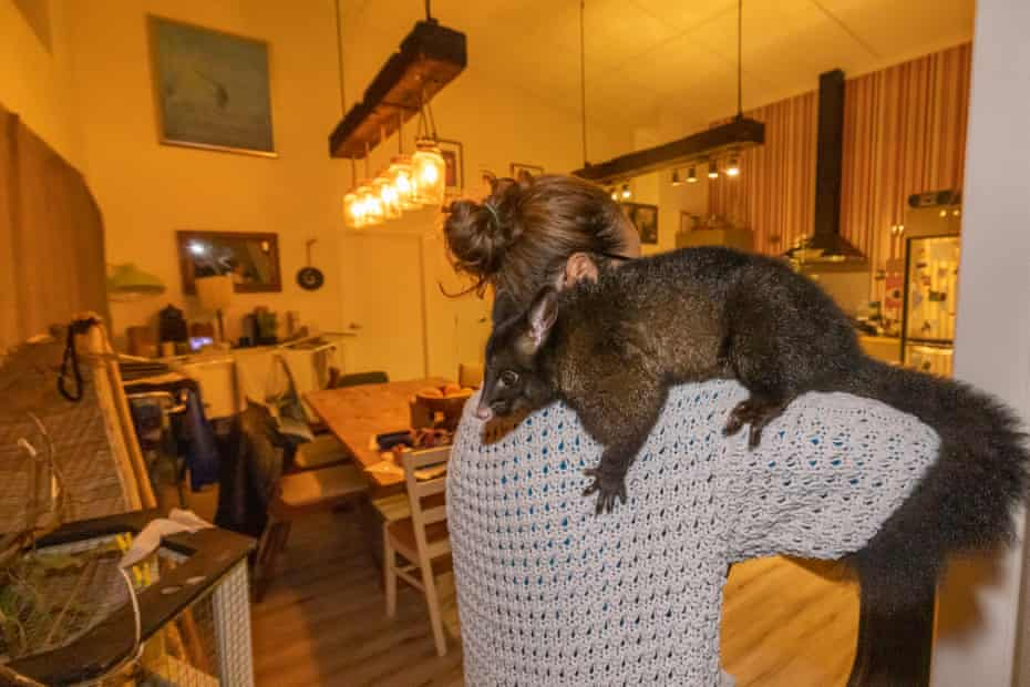 Maurice the pet possum. 'He's got really, really cold feet, and he puts them all over your head.'
