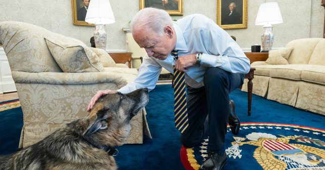 Joe Biden's dog has died