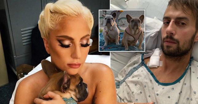 Lady Gaga, her pet bulldogs Koji and Gustav, and her dogwalker Ryan Fischer