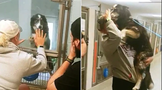 Images of Brittney Novickis reuniting with her husky Ashley at Halifax Humane Society