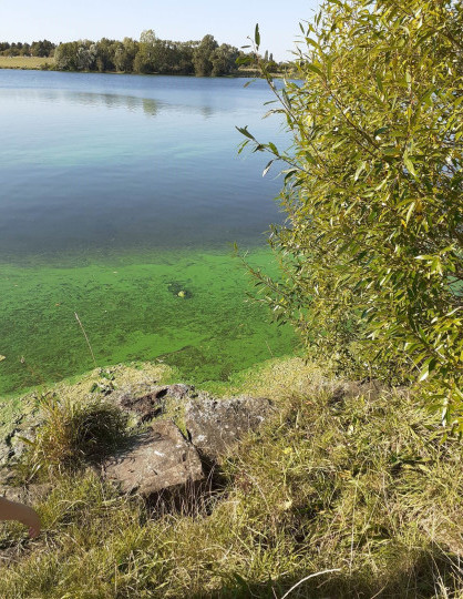 Pet owners urged to be careful after dog almost dies swimming in algae-filled pond