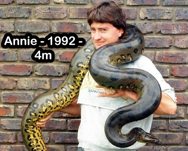 Annie the anaconda weighs over 40kg and is over 4 metres long.