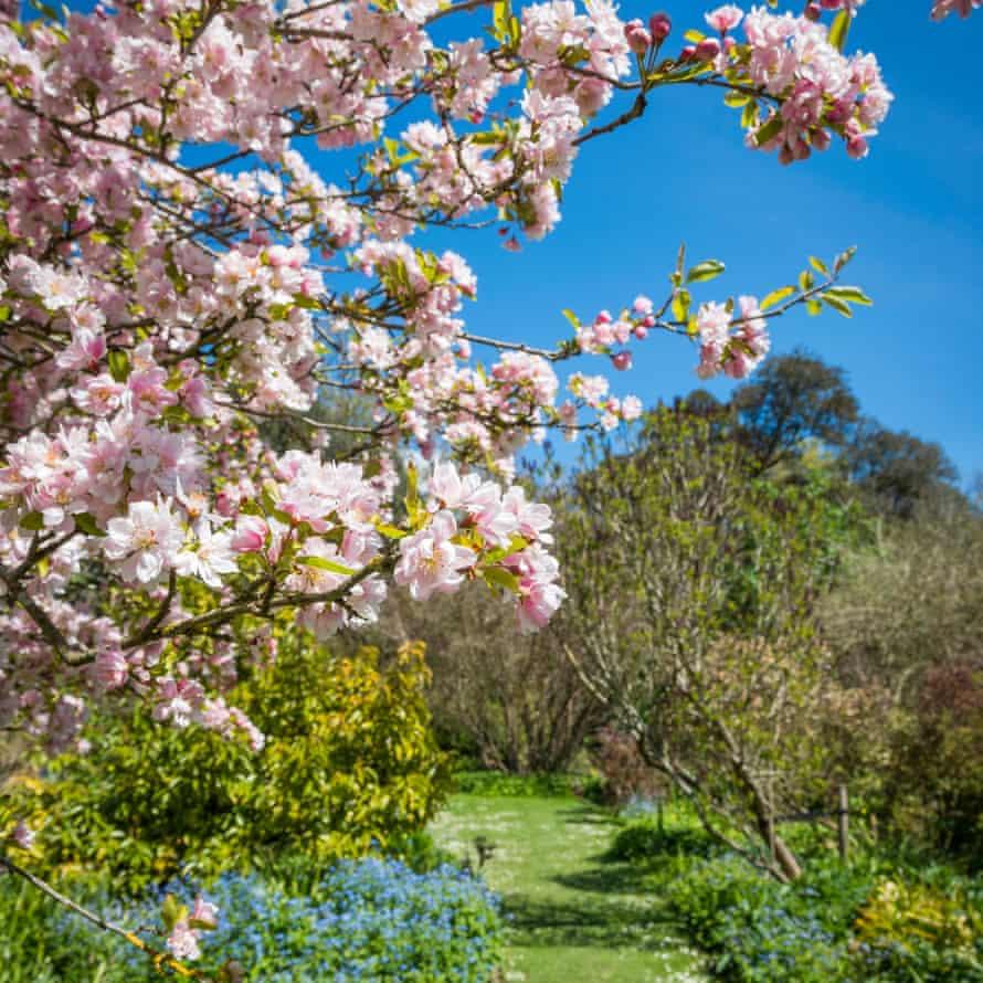 Flowering trees at Highdown Gardens
