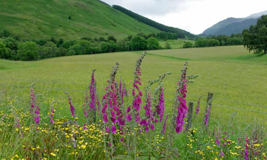 A valley with flowers in Perthshire