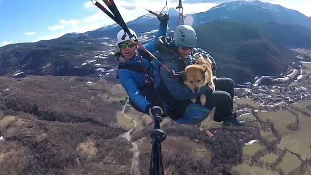 Daredevil dog enjoys paragliding over 8,000 in the the air with owners