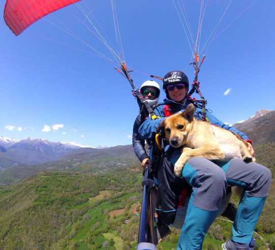 MERCURY PRESS - (PICTURED Nico, Laia and Chico) A daredevil dog takes to the skies at over 8,000 feet high with its owners. Three-year-old Shepherd mix, Chico, has seen the Alps, Andes and Himalayas from 8,000 feet above the ground while attached to owner, Nico Cordero, 41, and wife, Laia, 36. The brave pooch is strapped to the couple with a harness before taking to the skies in Europe, South America and Asia. Adorable video footage shows Chico looking relaxed in Laia's arms as they descend. SEE MERCURY COPY