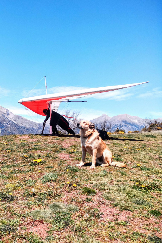 MERCURY PRESS - (PICTURED Chico) A daredevil dog takes to the skies at over 8,000 feet high with its owners. Three-year-old Shepherd mix, Chico, has seen the Alps, Andes and Himalayas from 8,000 feet above the ground while attached to owner, Nico Cordero, 41, and wife, Laia, 36. The brave pooch is strapped to the couple with a harness before taking to the skies in Europe, South America and Asia. Adorable video footage shows Chico looking relaxed in Laia's arms as they descend. SEE MERCURY COPY