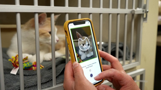 Tably is the app that claims to decode a cat's emotions (Reuters)