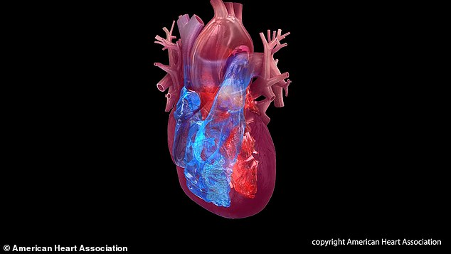 The groups found that heart transplant recipients had similar survival rates regardless of the drug use of their heart donors (file image)