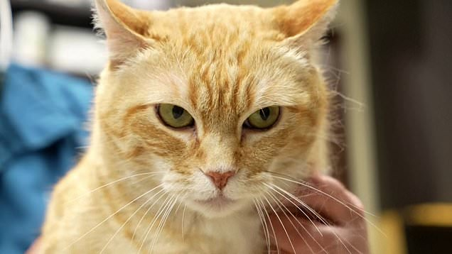 Is your cat happy? AI app decodes feline feelings