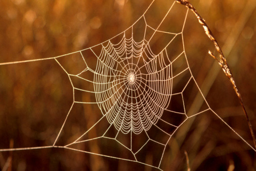Frost Covering Cobweb