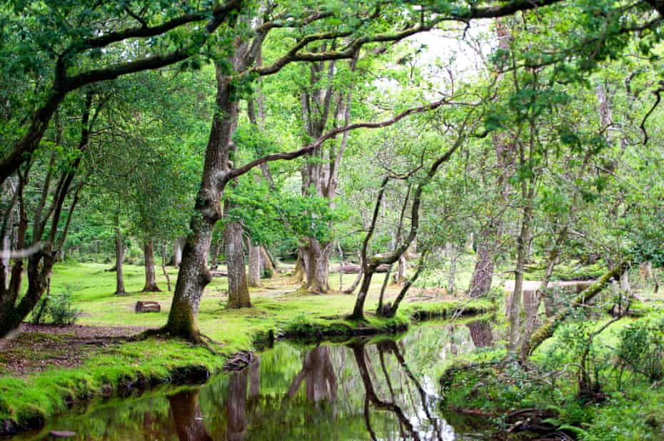 A tranquil pool on a countryside walk in the New Forest.