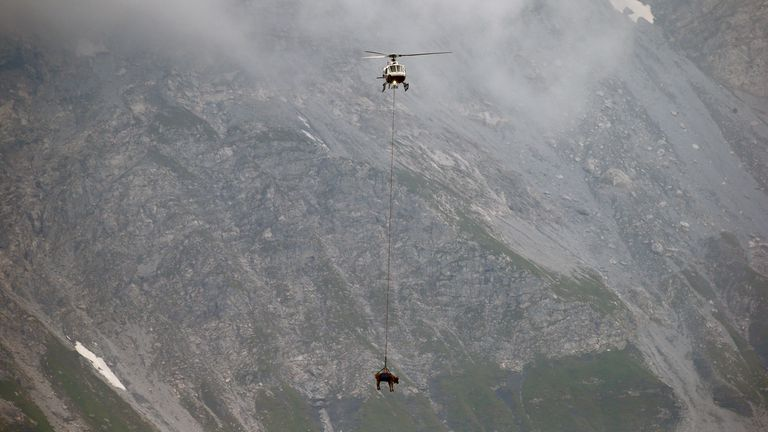 The cows dangled from below the helicopter