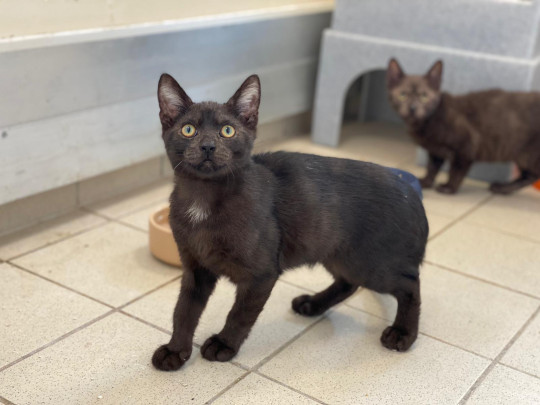 spike the kitten, who's being cared for by charity blue cross
