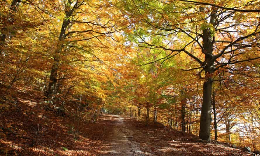 The Monte di Mezzo reserve in autumn