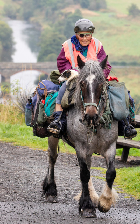 Eighty-year-old Jane Dotchin who travels from Hexham to the Scottish Highlands with her horse Diamond and Dinky her disabled Jack Russell. Sept 6 2021 . See SWNS story SWSChorse. An 80-year-old woman who wears an eyepatch is on an annual trek with her pony from England to the Highlands - on a seven-week adventure which began in 1972. Jane Dotchin packs her saddlebags onto her trusty pony?s back every year, and heads to the hills from her home near Hexham, Northumberland on an epic 600-mile trek to Inverness, covering between 15 and 20 miles a day. She set off on August 31 with her steed, Diamond, aged 13, and her disabled Jack Russell, Dinky for company, from the off-grid smallholding where she lives. She carries everything she needs including her tent, food and just a few belongings - and despite wearing an eyepatch is determined to continue as long as she can.