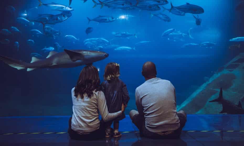 Plymouth's National Aquarium organises litter picks around the west Devon city.