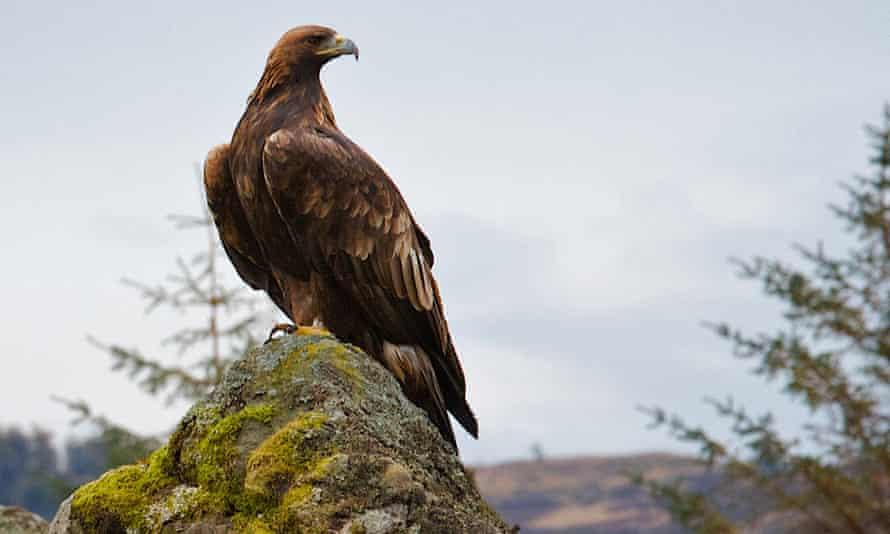 golden eagle Responsible Travel trip