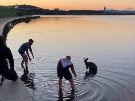 This was my morning - only in Canberra - well done to these two guys - bloody freezing - the guy wearing the Soldier On Top is a Navy Clearance Diver - good news the kangaroo came good??