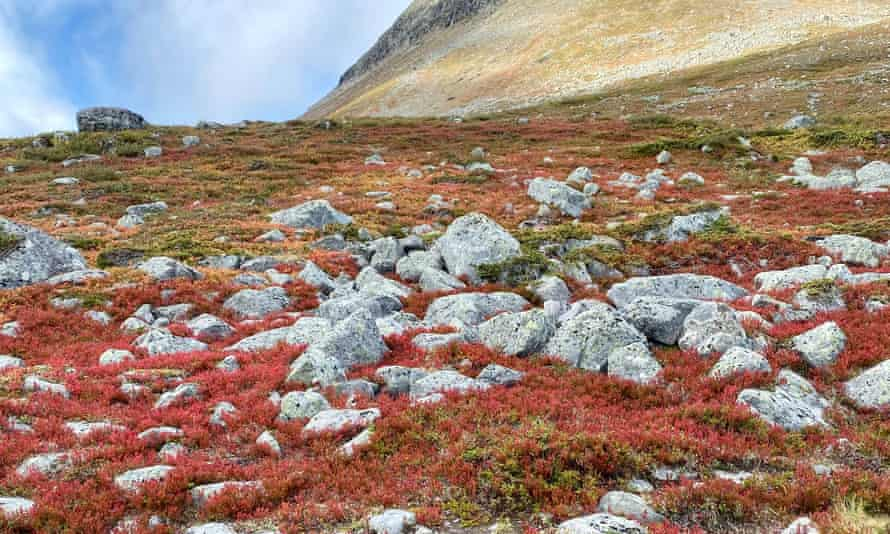 The autumnal colours of Lapland earlier this month.