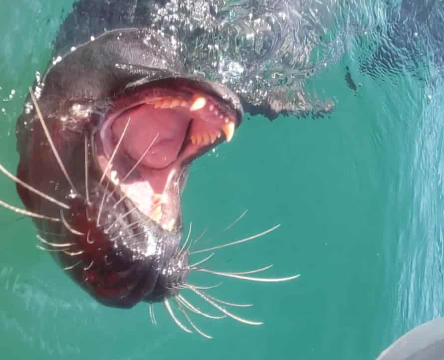 Rachel Lutz's meeting with a seal in the Scilly Isles in July.