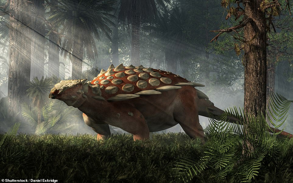 It isn't clear exactly whatSpicomellus afer would have looked like, but researchers say it would have been similar to other Ankylosaurs (artist impression pictured)