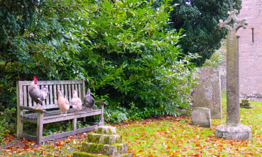 Chickens in the churchyard at Blanchland