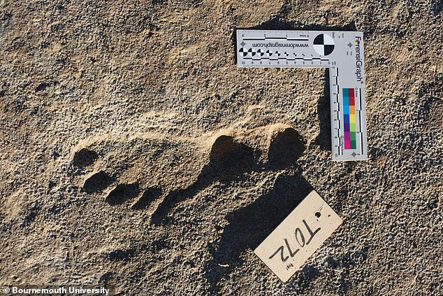 Because the prints were made by homo sapiens, researchers were able to compare them to modern humans and estimate the age of the people who made