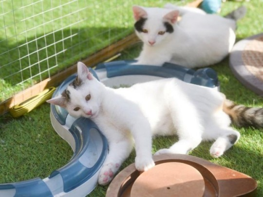 Lorraine and Adrian Marshall are the proud owners of 10 cats whom they see as their 'babies' since their children grew up.
