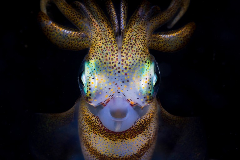 These are the stunning aquatic images that have wowed the judges at the annual Ocean Photography Awards 2021. // Photographer: Matty Smith / A portrait of a squid. / Location: Bushrangers Bay, Australia // TRIANGLE NEWS 0203 176 5581 // news@trianglenews.co.uk SHARKS smile for the camera, sleepy turtles glide through the sea and a fish puffs on a cigarette in these striking photos. The stunning snaps were honoured in the prestigious 2021 Ocean Photography Awards, which has just announced its winners. The annual awards focus on adventure, conservation and exploration of the deep blue sea.