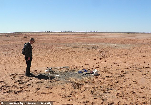 While Lake Pinpa is today a bone-dry desert, 25 million years it was a vast, shallow body of water surrounded by verdant forests. Pictured:Flinders University palaeontologist Warren Handley at the dig site near Lake Pinpa, South Australia