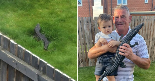 Bricklayer Nigel Holroyd solves mystery of the Castleford Croc 'running wild' in his garden