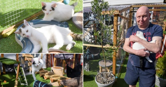 A cat-loving couple face having to tear down their pets' giant playground after building it without planning permission.