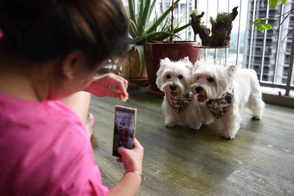 This photo taken on August 29, 2021 shows dog owner Carrie Er using a mobile phone to film her pet white terriers Sasha and Piper (R) at her home in Singapore.