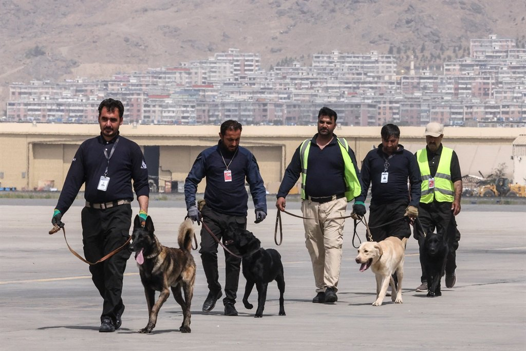 Handlers training dogs which were left behind during last month's chaotic evacuations from Afghanistan, in a makeshift training centre at the airport in Kabul.