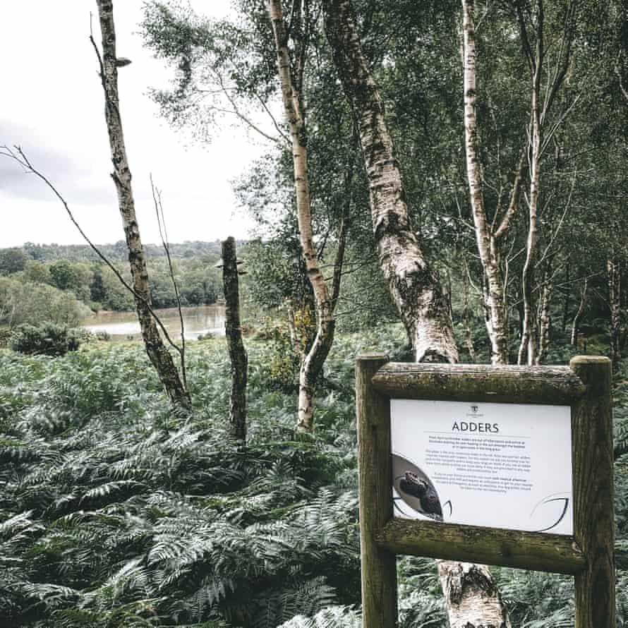 Adder sign at Silverlake, Dorset.
