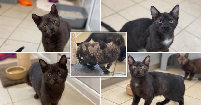 Five kittens who were abandoned in a cardboard box and will soon need forever homes