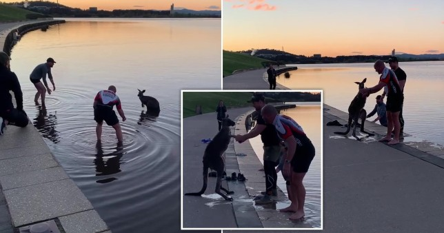 An exhausted kangaroo was pulled from chilly waters by two heroic passers-by in Australia.
