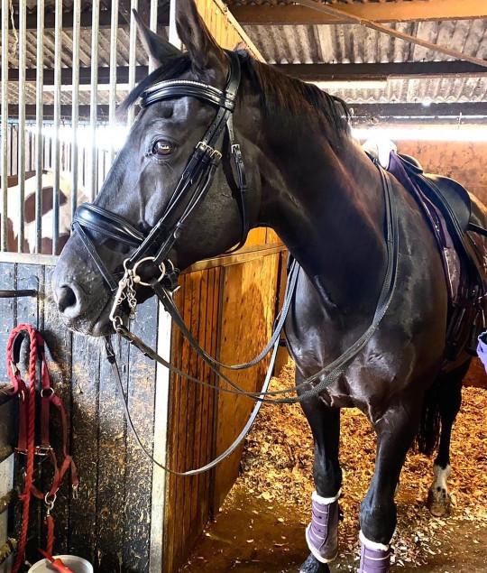 Katie Price's horse