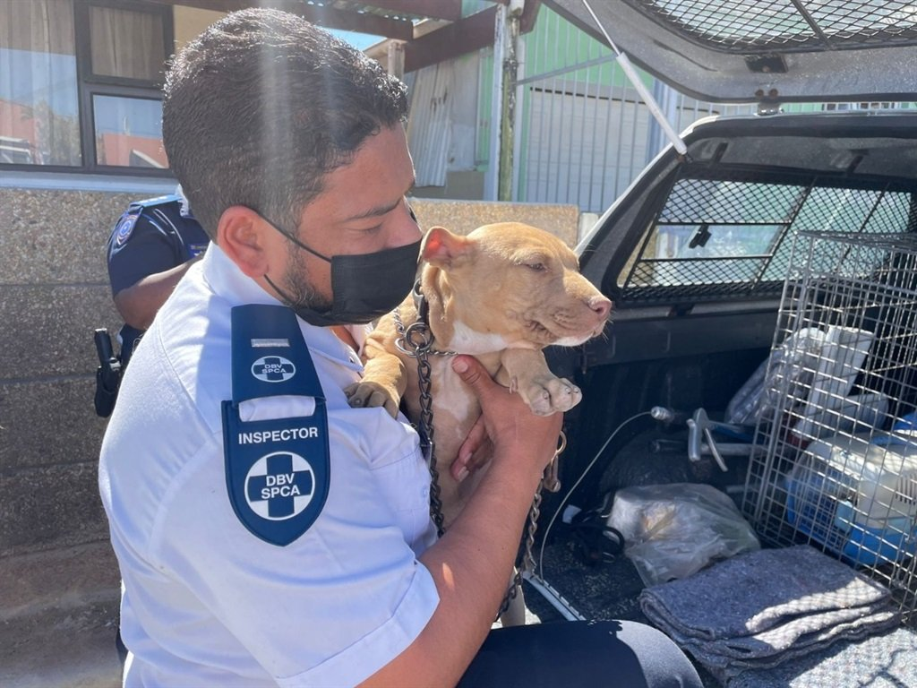 Inspector Mark Syce confiscating the dogs from the Tafelsig property