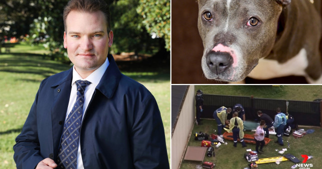 Dr Sam Kovac has called for American Staffordshire bull terriers be banned in Australia after two women were 'mauled to the bone' (Picture: 9News, 7News)