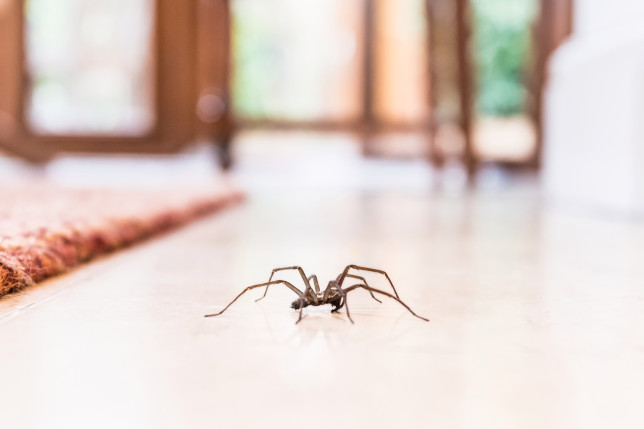 spider in a home