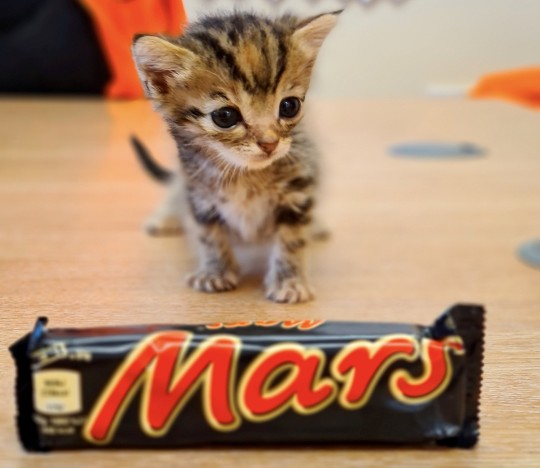 Freddo the kitten who is the same size as a Mars Bar.